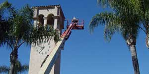 Bee Removal Los Angeles CA Difficult bee removal using a manlift.