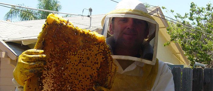 Los Angeles Bee Removal Guys Tech Michael